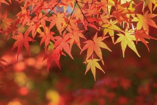 両親や祖父母とシニアだからこそお得に♪ 高齢者と秋の旅行をたのしむコツ