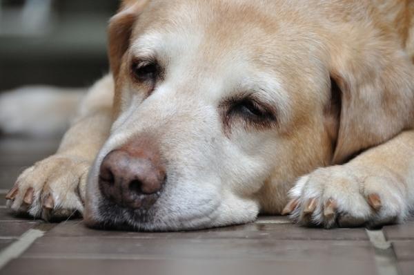 ペットも高齢化。注目が集まる「老犬ホーム」ってどんなところ?