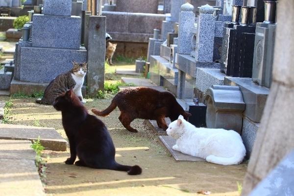 お墓にいくらかけるか
