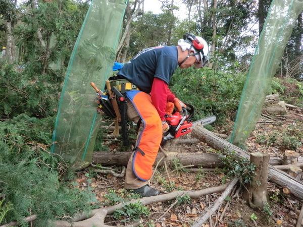 熱海の森で伐木のボランティア