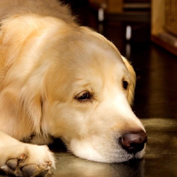 犬の世界も高齢化?高まる老犬介護サービス需要!