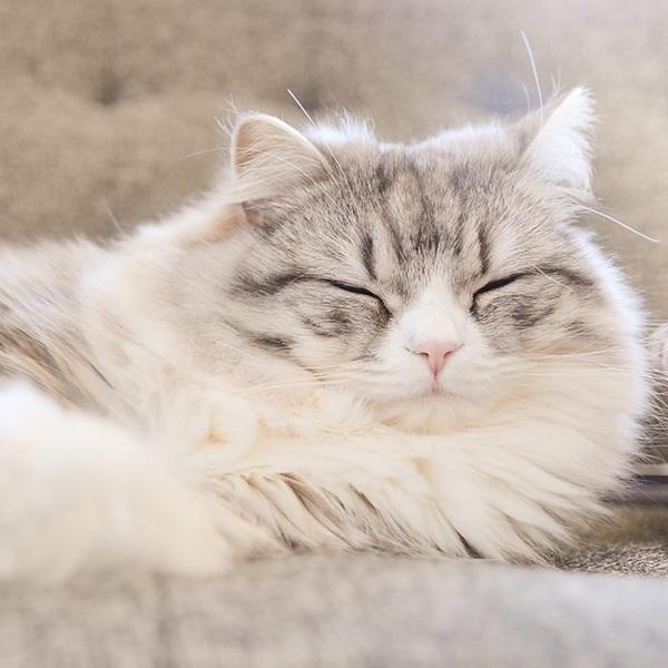 猫もなる認知症