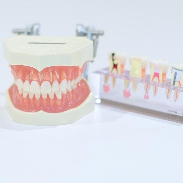 歯を大切に!0歳から始める8020運動