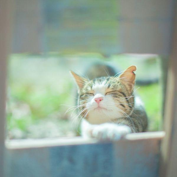 日光浴の健康効果
