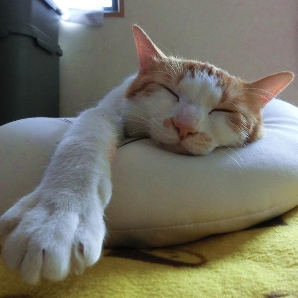 昼寝のススメ 世代別にみる昼寝の効果とは?