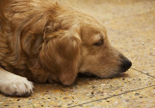 なぜ今も補助犬の入店拒否はなくならないのか?